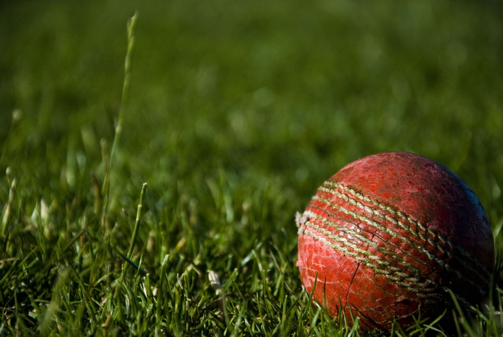 SA Under-19s surge to five-wicket win over New Zealand - Sports Leo